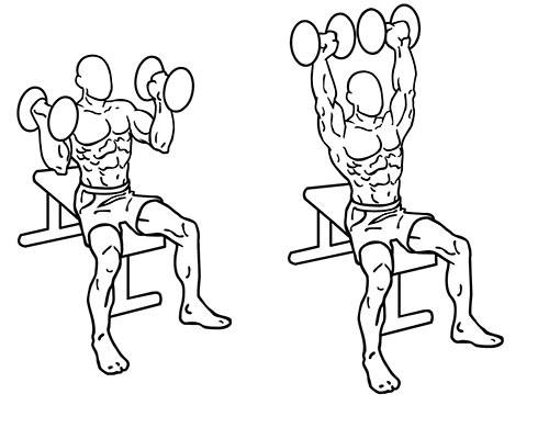 drawing of the shoulder press exercise with dumbbell